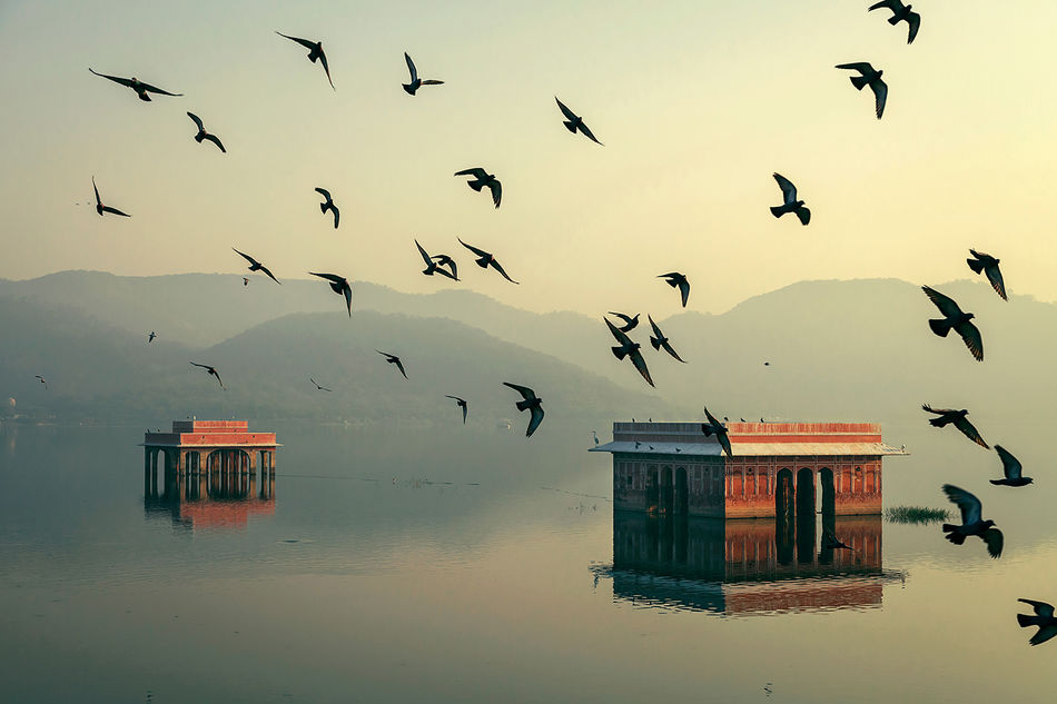Jal Mahal, Jaipur, India Beauty In Nature Bird Flock Of Birds Flying Incredible India India Jaipur Jal Mahal No People Pigeons Rajasthan Travel Travel Destinations Travel Photography Water