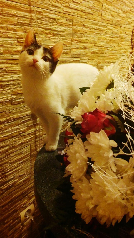 Hello World Taking Photos Catlovers My Kitten Oktober Flowers Love