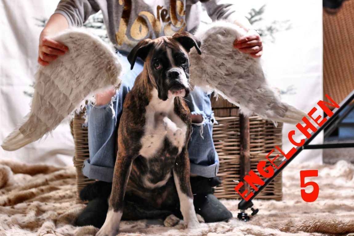 Türchen 5 Juno's Adventskalender Juno's World For My Friends That Connect I Love My Dog Boxer Dogs Boxer Hello World