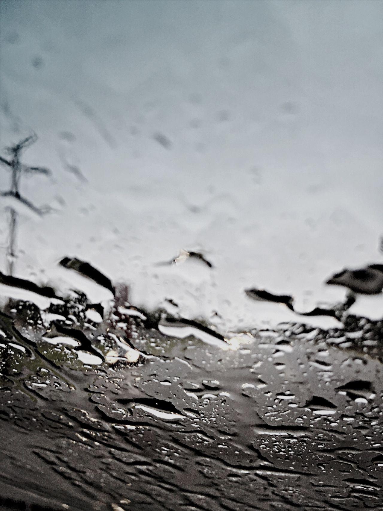Beautiful stock photos of rain, Car, Close-Up, Day, Defocused