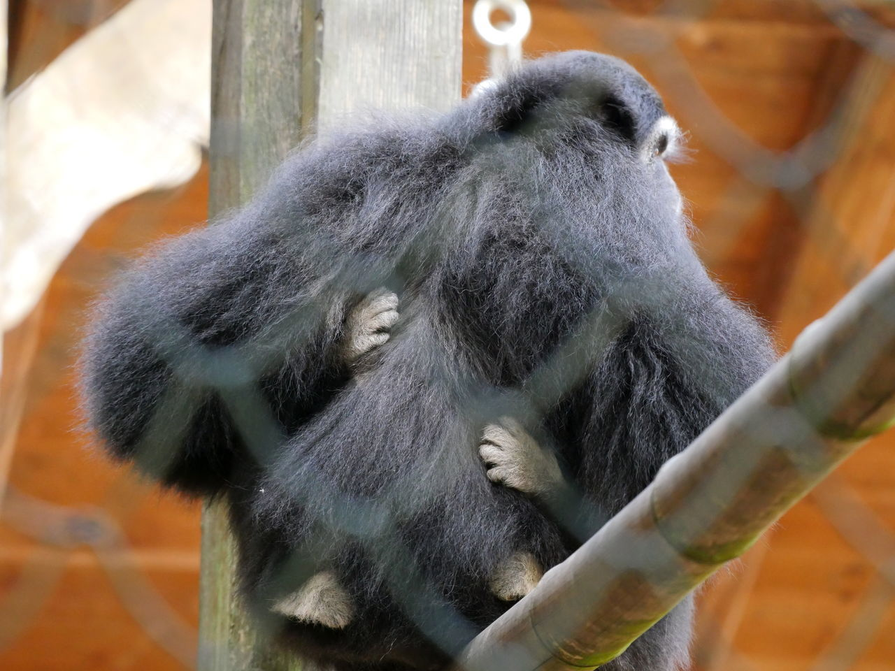 Animal Body Part Animals Hands Hold On Tight Monkeys Neighborhood New Life No People Offspring Outdoors Security Young Animal Zoology Thinks I Like Animal Hair Animal Themes Taking Photos From My Point Of View Always Be Cozy