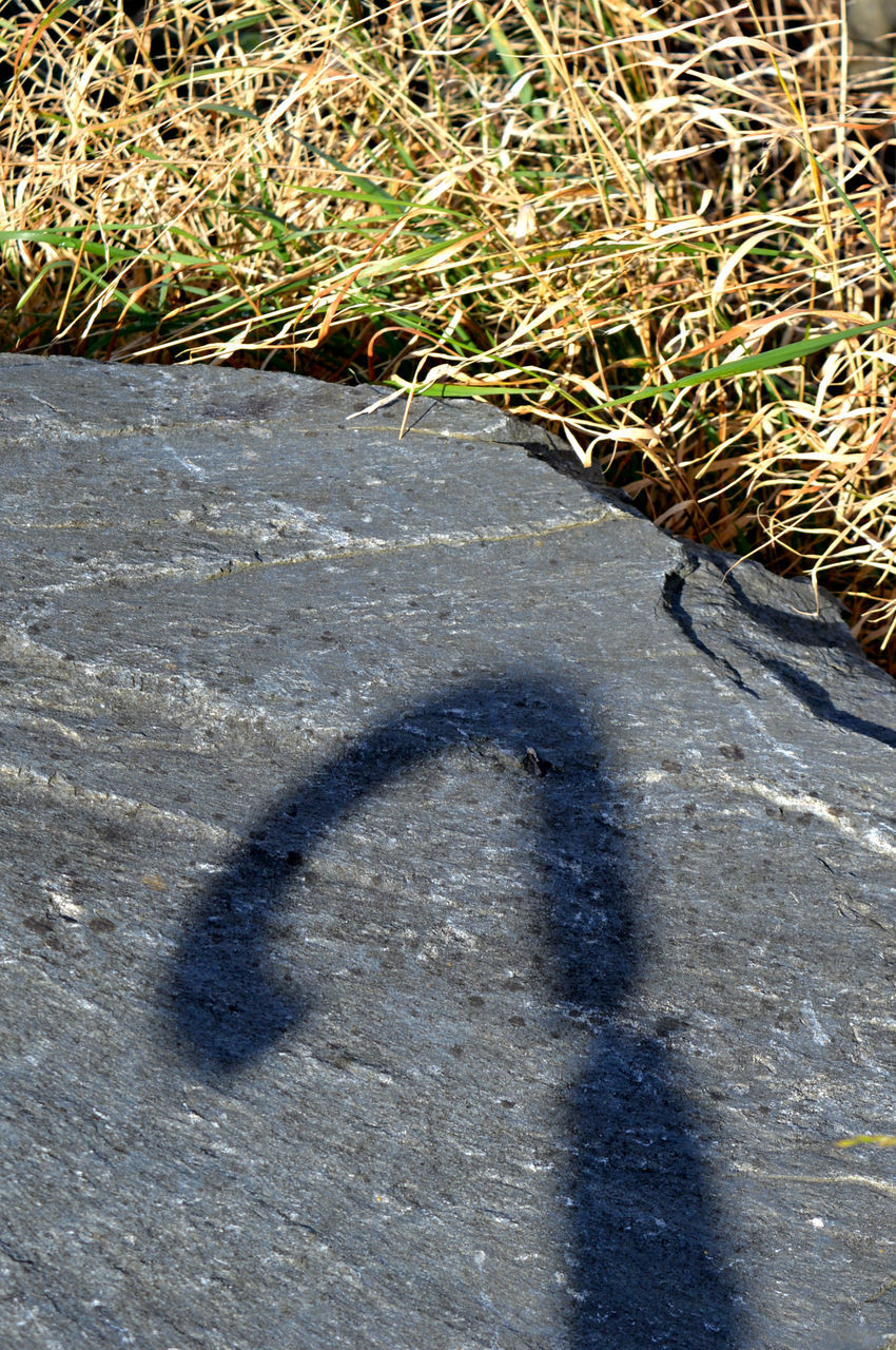 shadow, day, high angle view, sunlight, nature, outdoors, no people, plant, grass