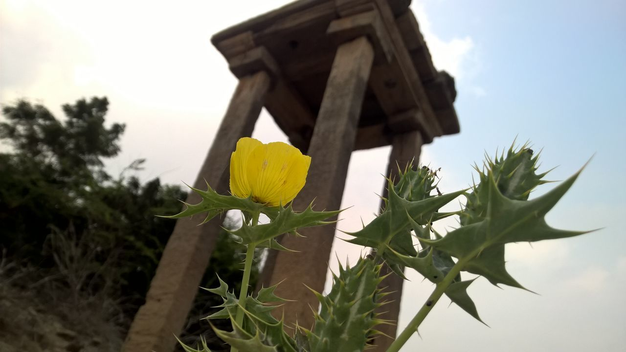 Beauty In Nature Birdhouse Blooming Close-up Day Flower Flower Head Fragility Freshness Growth Leaf Low Angle View Nature No People Outdoors Petal Plant Sky Tree Yellow