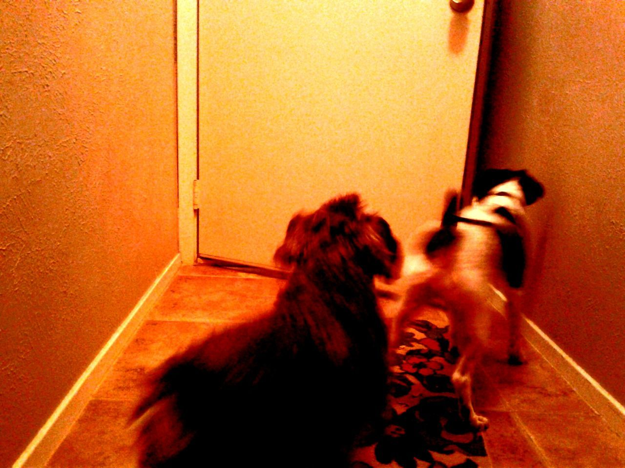 Indoors  Animal Themes Dog Pets Domestic Animals Dogs Canine Love :) Canines Welcome Home!