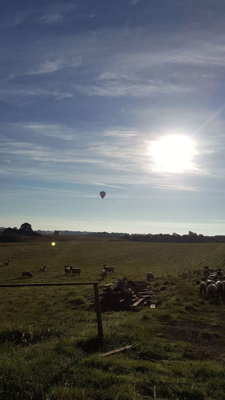 Hot Air Balloons In The Sky Field Landscape No People Nature Agriculture Air Vehicle Outdoors Day Flying Beauty In Nature Sky Aerospace Industry Astronomy Hot Air Balloon Oil Pump