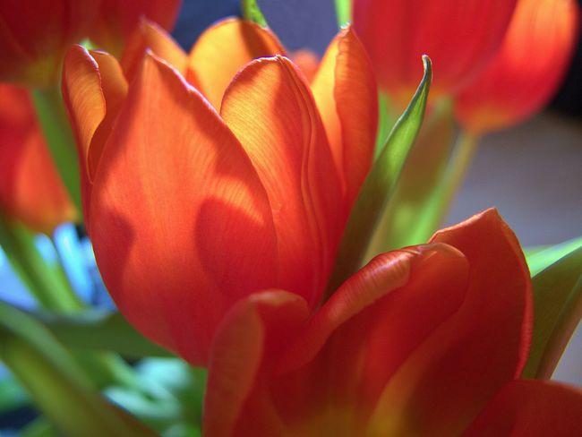 Flowers EyeEm Best Shots Blume ...schon Wieder! Whispers Of Spring