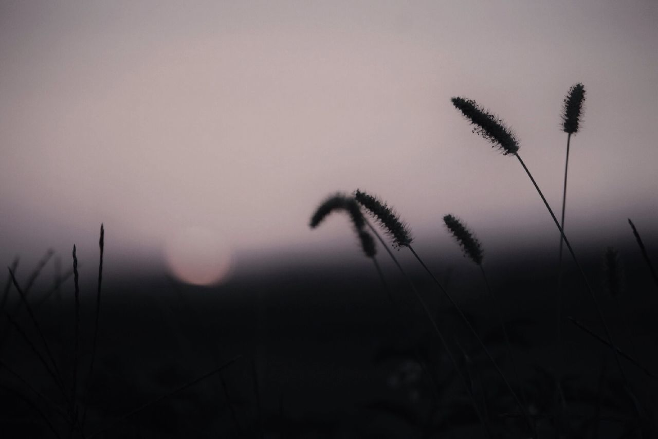 Beautiful stock photos of meadow, Botany, Dusk, Grass, Meadow