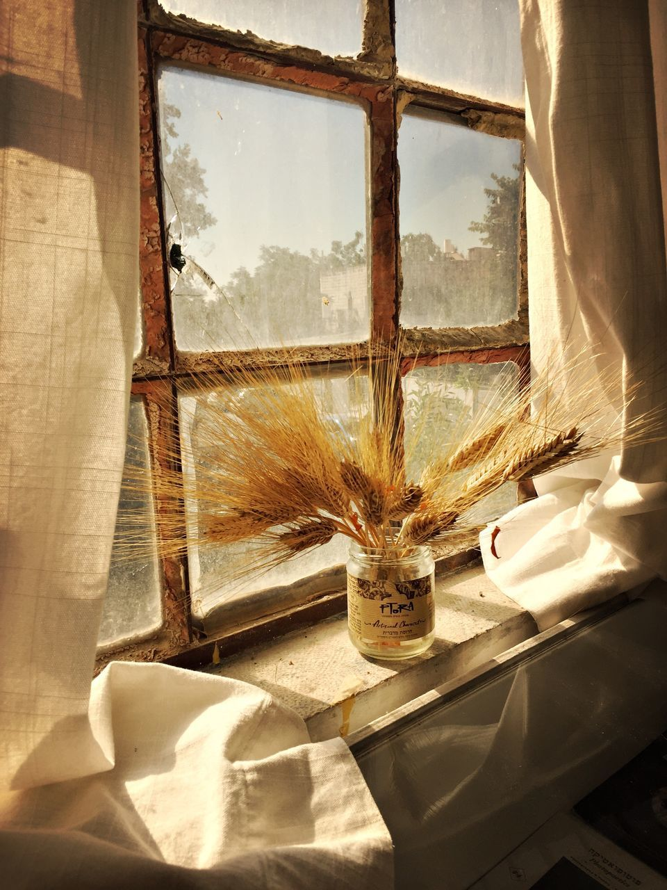 window, indoors, curtain, no people, day, close-up, nature
