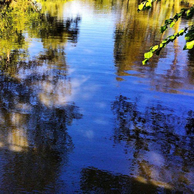 Lake Reflection Cheltenham Pittville Park Garden Water Nature Landscape Pond