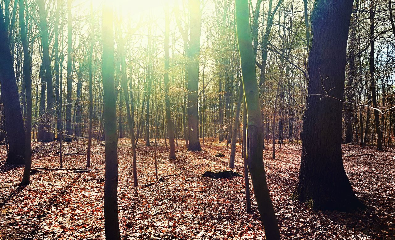 Sunset Tree Sunlight Nature Backgrounds No People Sky Outdoors Day Beauty In Nature Close-up Wald Sunlight Nature Walking Around Sonne Frühling Himmel Licht Und Schatten Spaß Tree