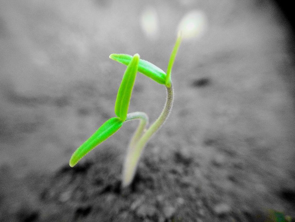 Off The Ground Newbie ✌ New Beginning Smartphone Photography Flower Photography Excited :) New Learn And Shoot: Simplicity Trying Macro Feeling Inspired New Hobby Macro_captures Only Green Green Green Green!  Two Freshhh