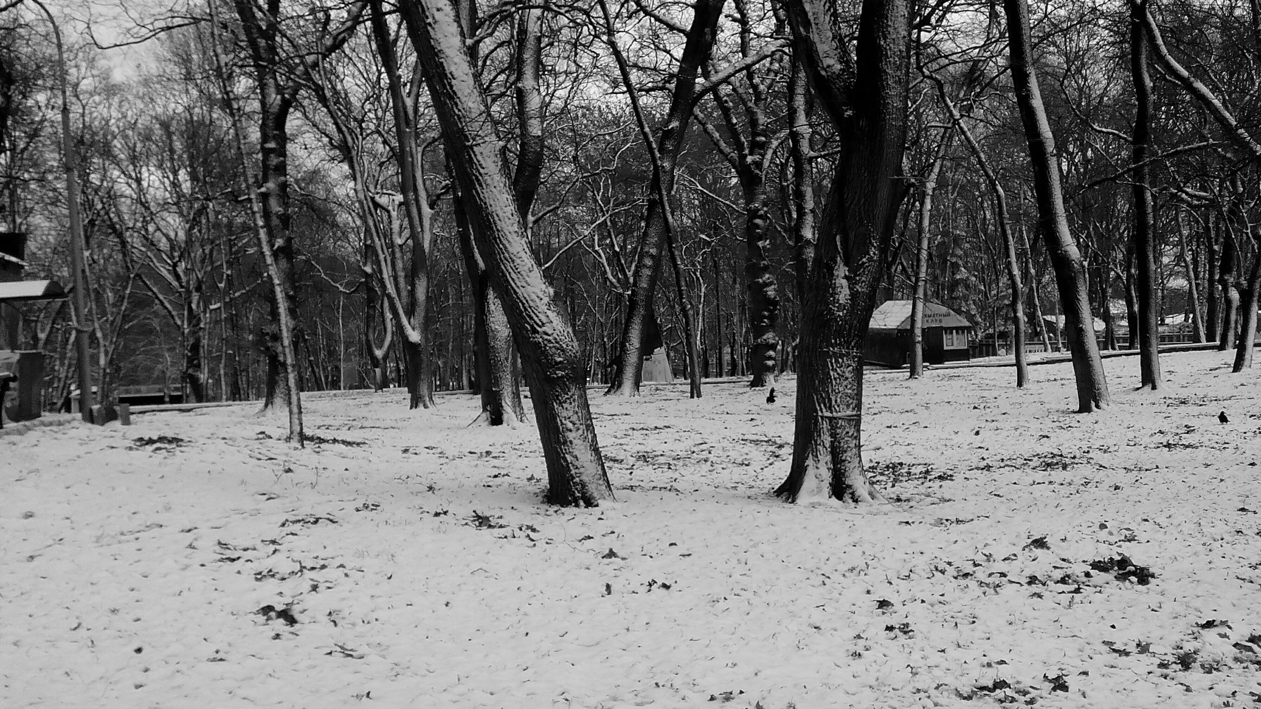 tree, winter, snow, tree trunk, cold temperature, season, bare tree, tranquility, nature, tranquil scene, branch, covering, weather, landscape, woodland, beauty in nature, forest, day, white color, growth