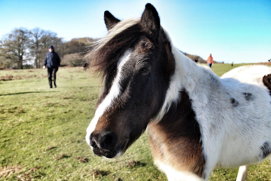 Beautiful stock photos of pony, Animal Themes, Beauty In Nature, Clear Sky, Day