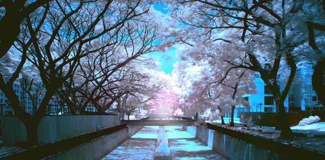 A first take on Infra Red Photography