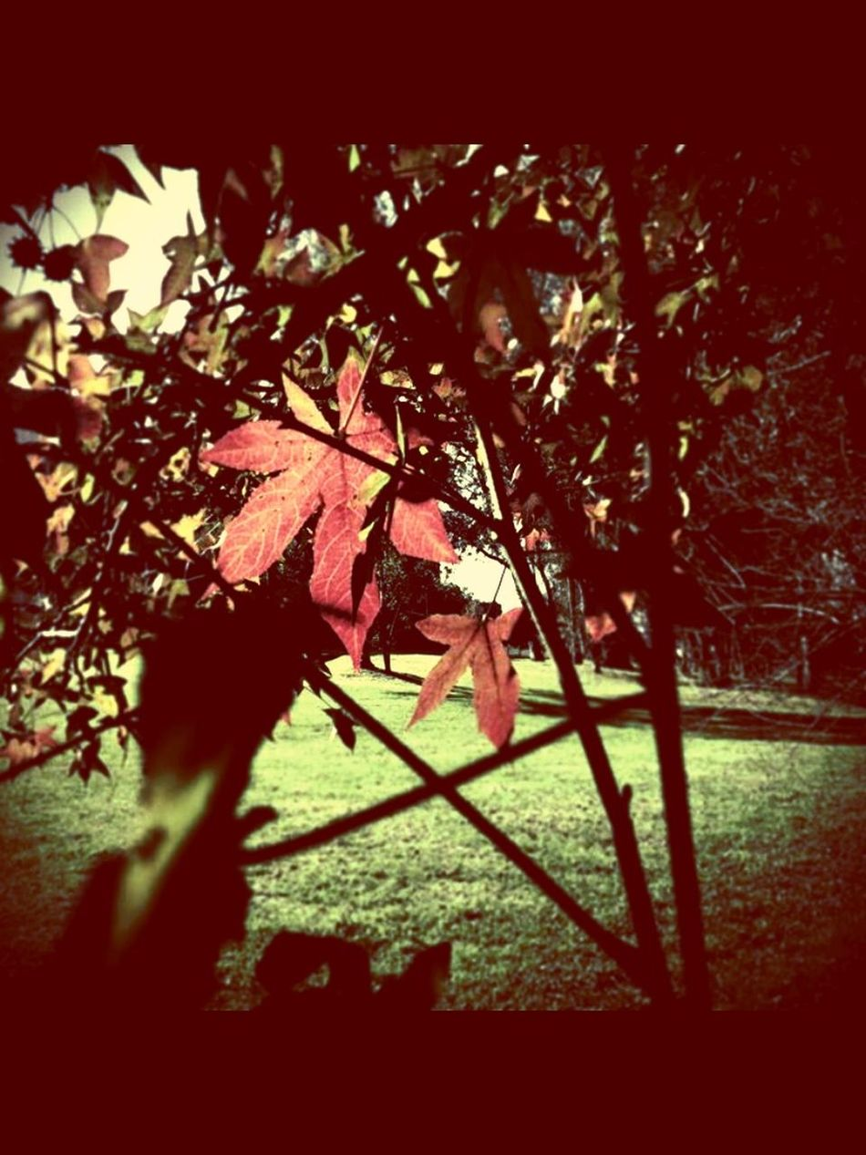 August Afternoon Leaves