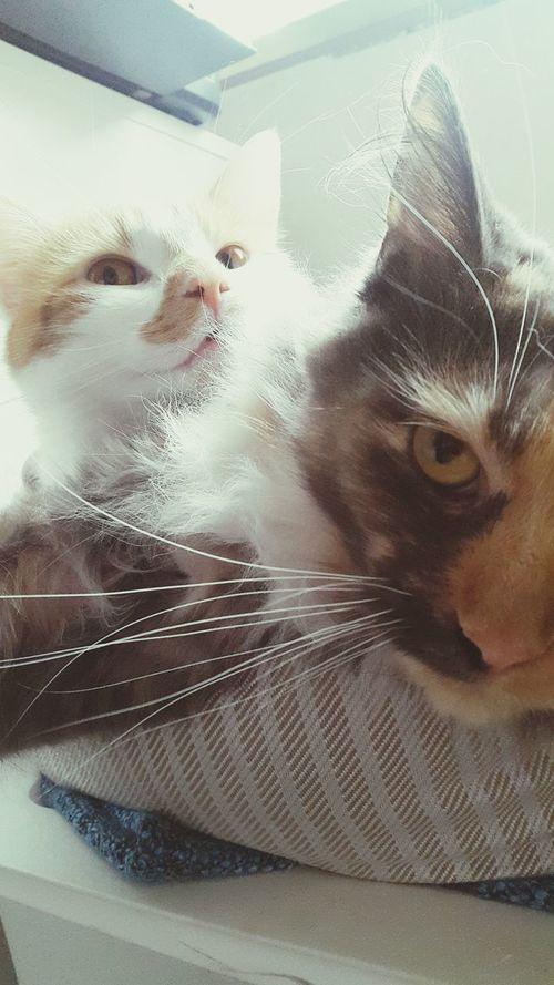 MarieTheCat HugoTheTomcat Cats Powernap Enjoying Life Meow🐱 Tomcat Sleeping Cat Close-up Relaxing Focus On Foreground Animals Crazy Cats =^..^= At Home