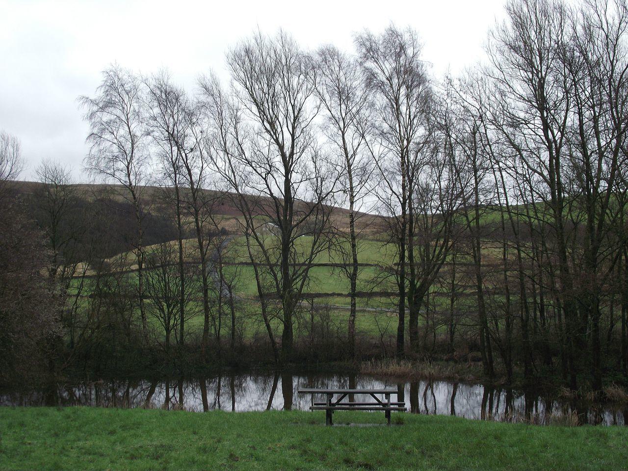Hollingworth Lake EyeEm Best Shots - Nature EyeEm Best Shots Trees And Sky Trees And Water