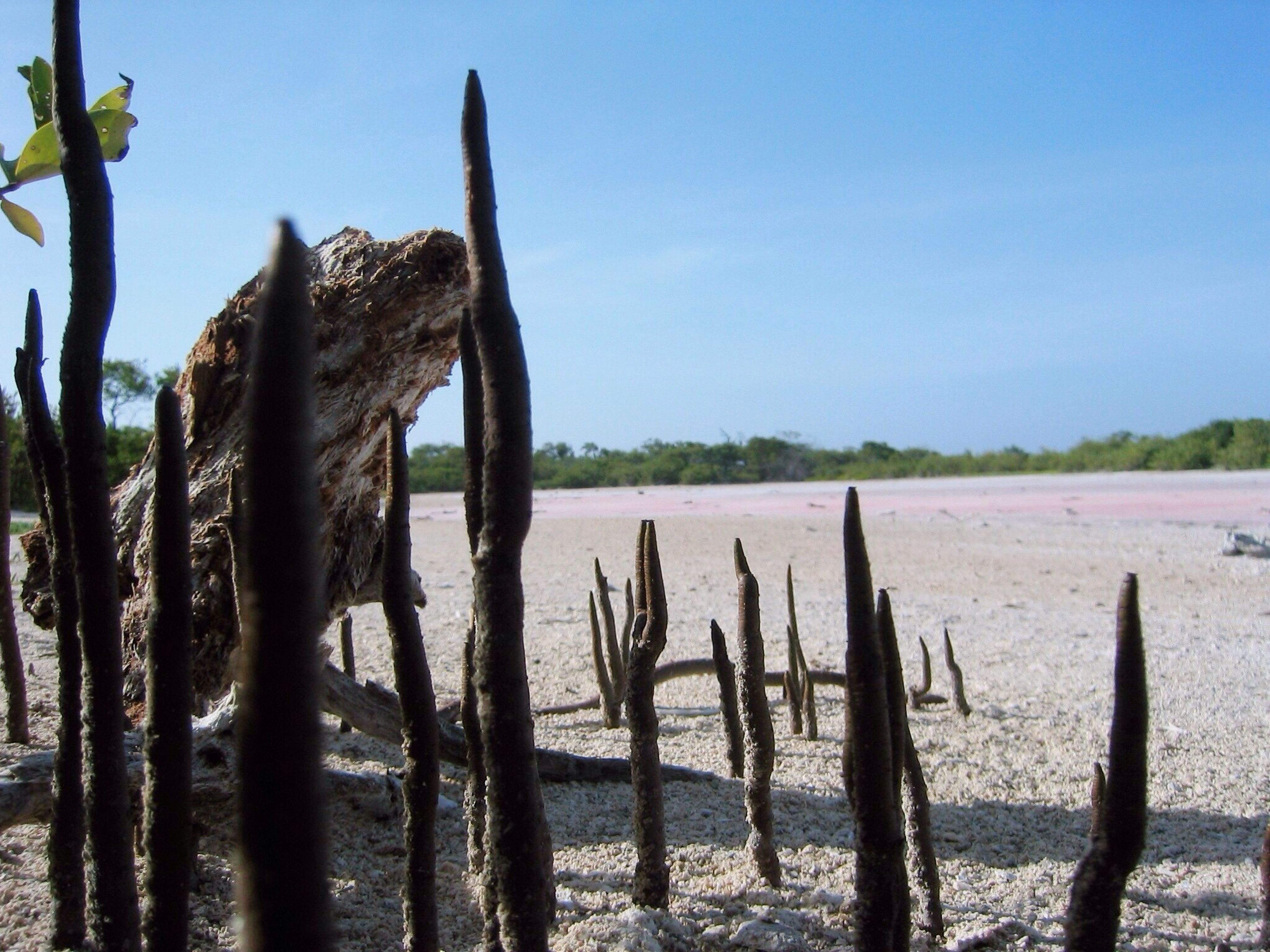 tranquility, water, tranquil scene, nature, beach, sea, sky, scenics, clear sky, beauty in nature, shore, wooden post, wood - material, sand, tree trunk, dead plant, blue, day, tree, non-urban scene