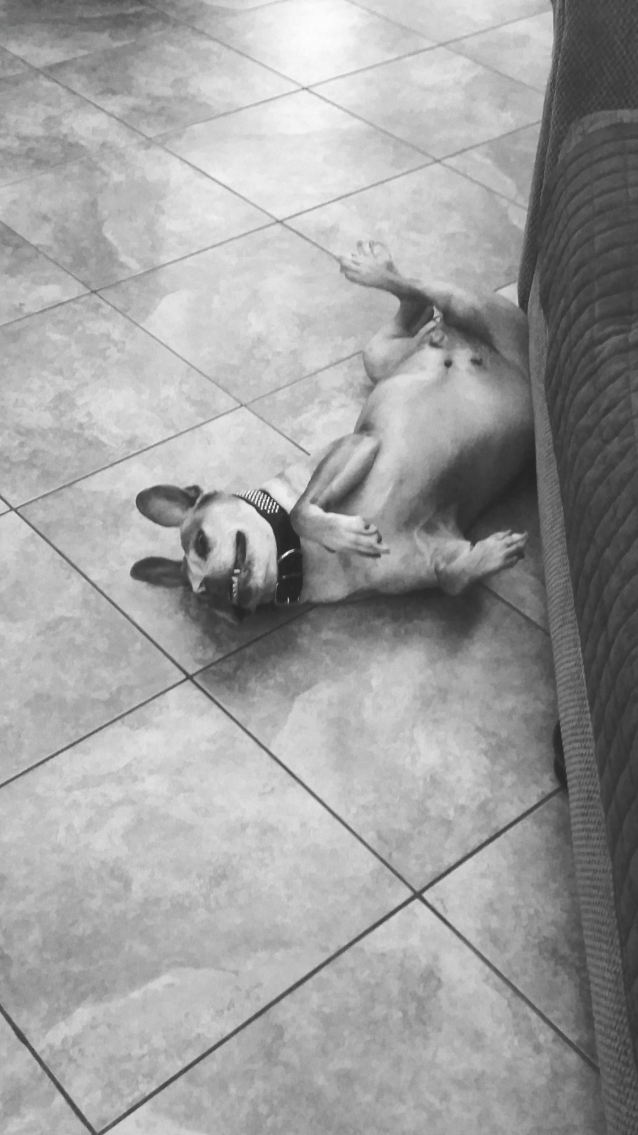 How i sleep all day long lol Pitbull Lives Matter Dog Lover Animal Love Dog World