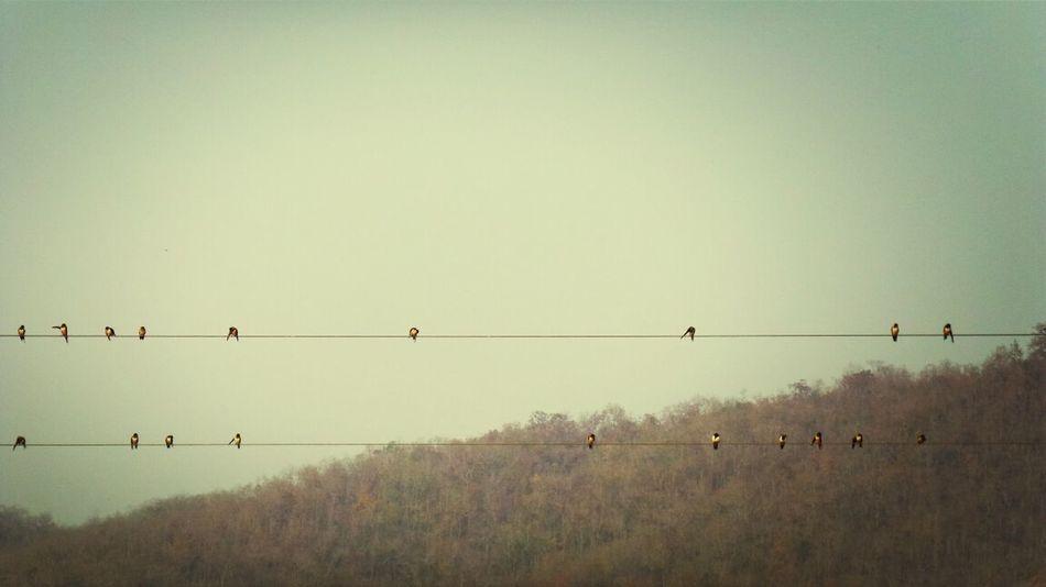 Maesariang Simple Life Nature Bird