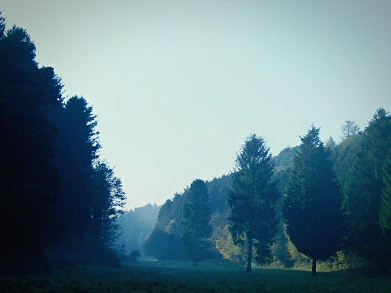 Trees Misty Morning Misty Forestwalk Woods North Yorkshire Walking Suttonbank