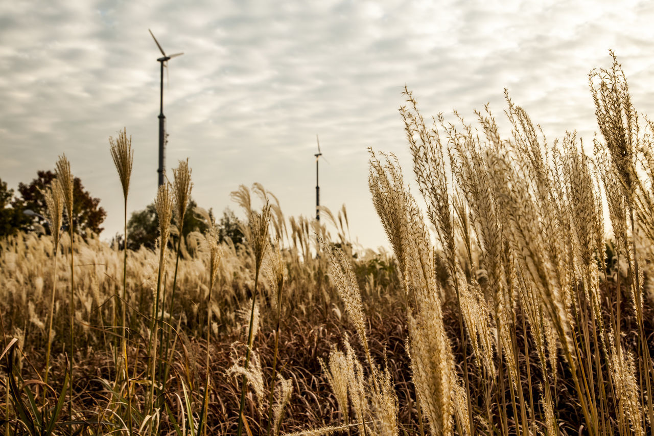 Low Angle View Of Windmill And Grass Against Sky