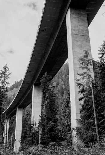 Elevated Highway over a forest. Architectural Column Architecture Architecture Black And White Bridge Bridge - Man Made Structure Built Structure Column Connection Day Dystopian Elevated Track Future Low Angle View No People Outdoors Regrowth Sky Tree