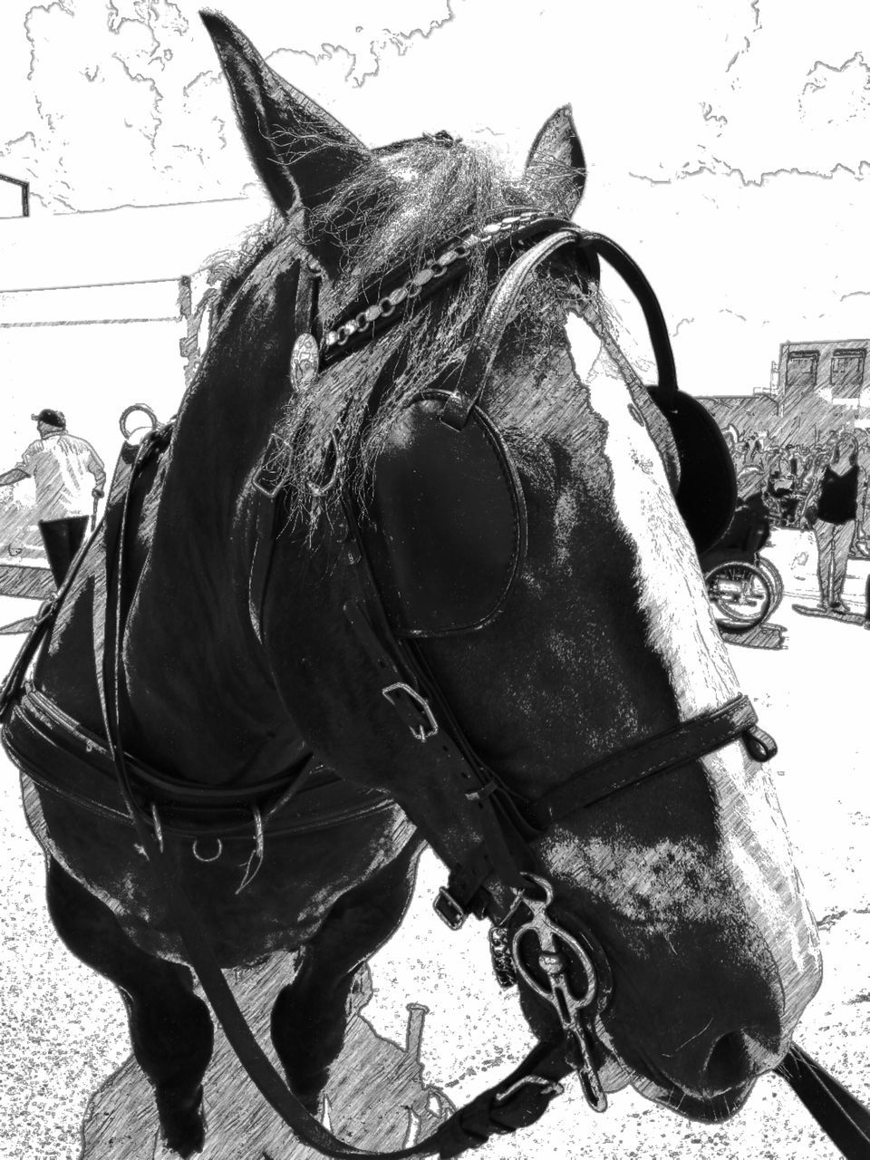 horse, animal themes, domestic animals, bridle, day, mammal, livestock, outdoors, one animal, no people, close-up, sky