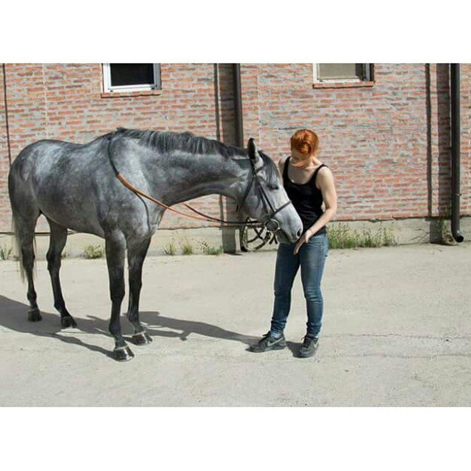 Love Thoroughbred Thoroughbredsofinstagram Instahorse instagram photooftheday caballo pferde instalove horsesofinstagram