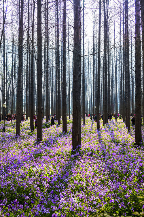 February Orchid Beauty In Nature Blossom Blue Flower In Bloom Nature Outdoors Plant Purple China February Orchid Freshness Growth Yew