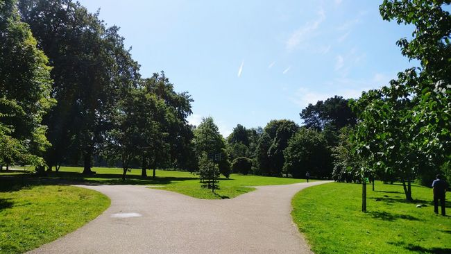 Tree Tranquil Scene Tranquility Park - Man Made Space Grass Sky Growth Footpath Shadow Green Color The Way Forward Scenics Nature Day Park Beauty In Nature Diminishing Perspective Non-urban Scene Solitude Outdoors Path Separating Paths Direction Cardiff Bute Park