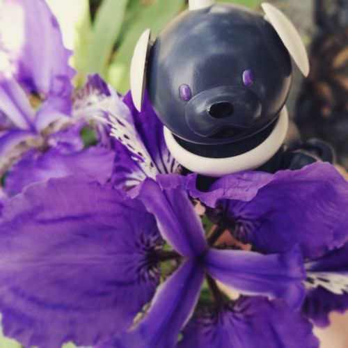 Sony AIBO Aibobox ERS-300 Dog Robot Chinese Garden Garden Purple Flower Nature Plant Growth Close-up Fragility Outdoors Freshness Beauty In Nature Flower Head Day No People Iris Latte Freshness Macoron