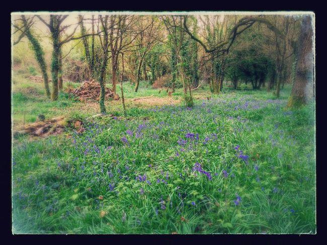 Fairy land;-)