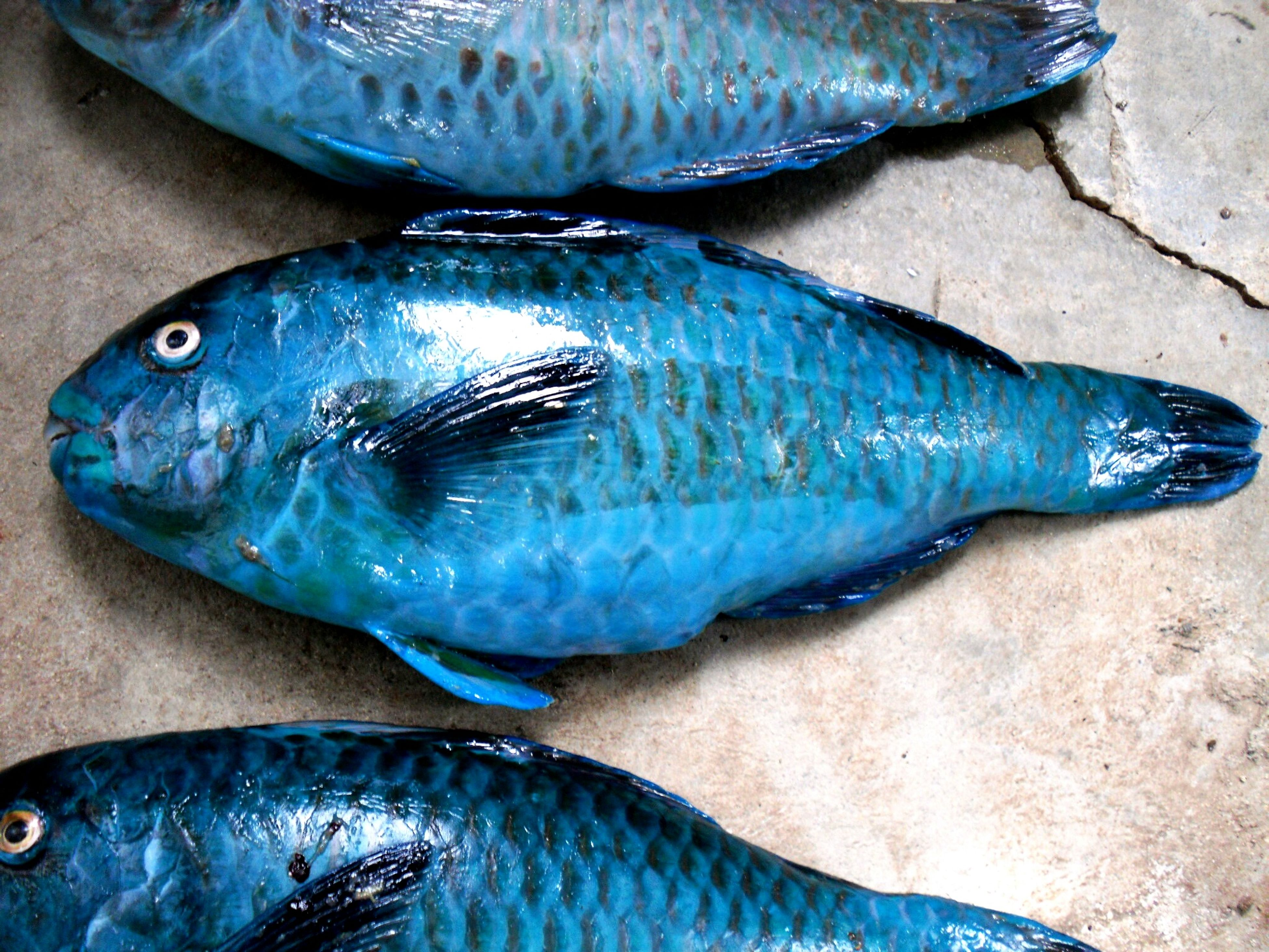 blue, water, fish, close-up, high angle view, food and drink, indoors, freshness, no people, still life, healthy eating, container, ice, day, seafood, directly above, dead animal, animal themes, plastic