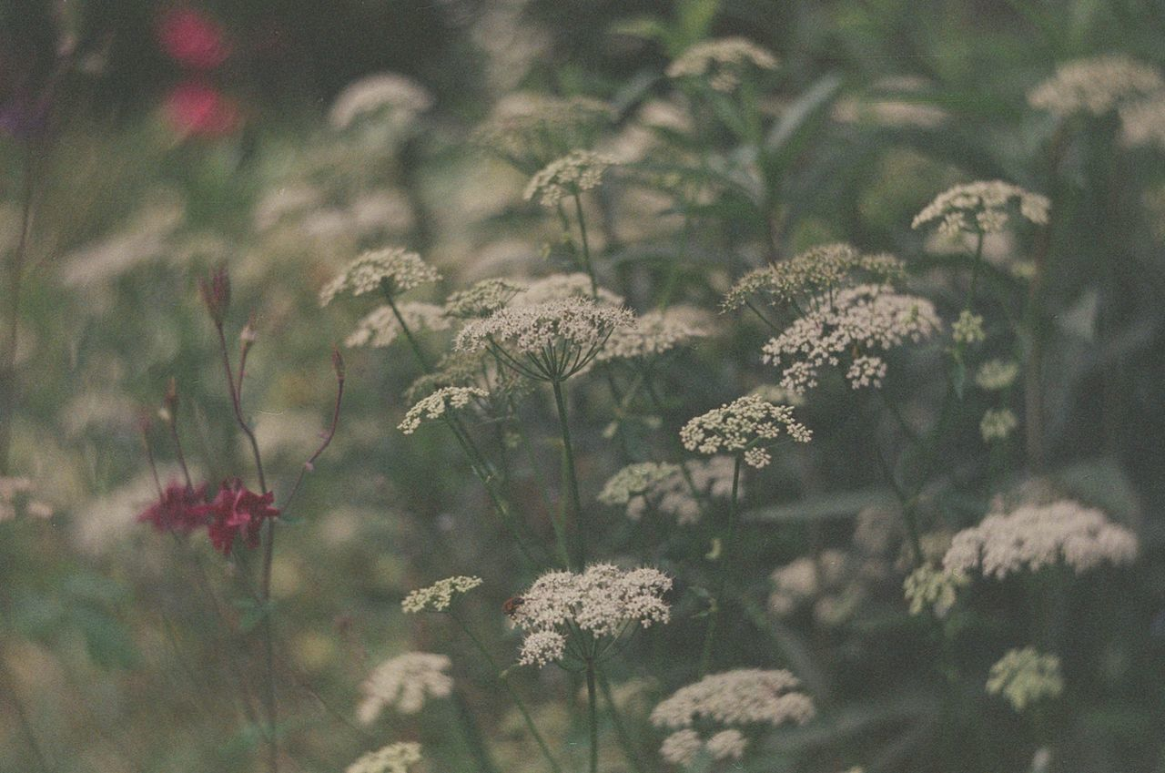 flower, nature, growth, plant, flora, blooming, no people, outdoors, day