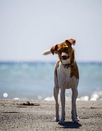 Dog Sea Mare Cane