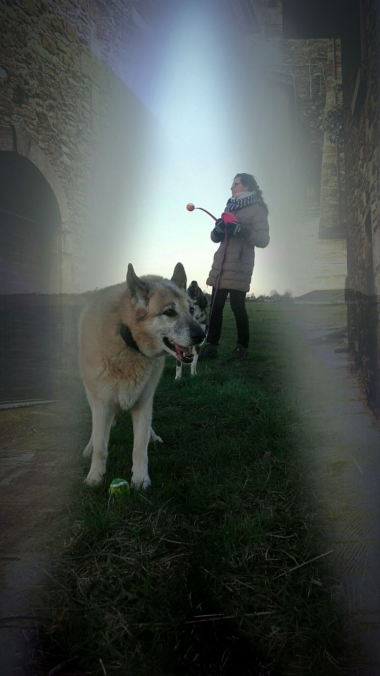 Dog Pets Digital Composite Friendship Loyalty Dutch Countyside Clouds And Sky Landscape_photography Winter 2017 Taking Photos Hello World Art Nederlands Enjoying Life EyeEm Best Edits Nederland EyeEm The Best Shots OpenEdit Landscape Silhouette Photography Photooftheday Check This Out Me Women