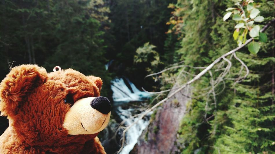 Teddy Bear Tree Stuffed Toy No People Nature Day Childhood Mountain Wild Animal Tatry Curiosity Jurney Adventure Animal Mascot Grizzly Bear Wild Life Landscapes Travel Mountains EyeEmNewHere Eye Em Nature Lover Autumn🍁🍁🍁 Poland The Great Outdoors - 2017 EyeEm Awards