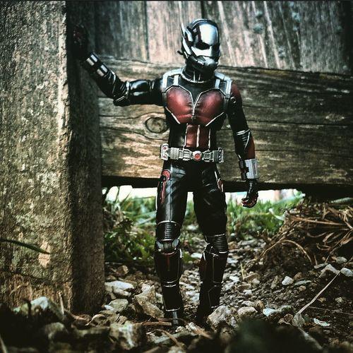Antman Marvel Toy Photography