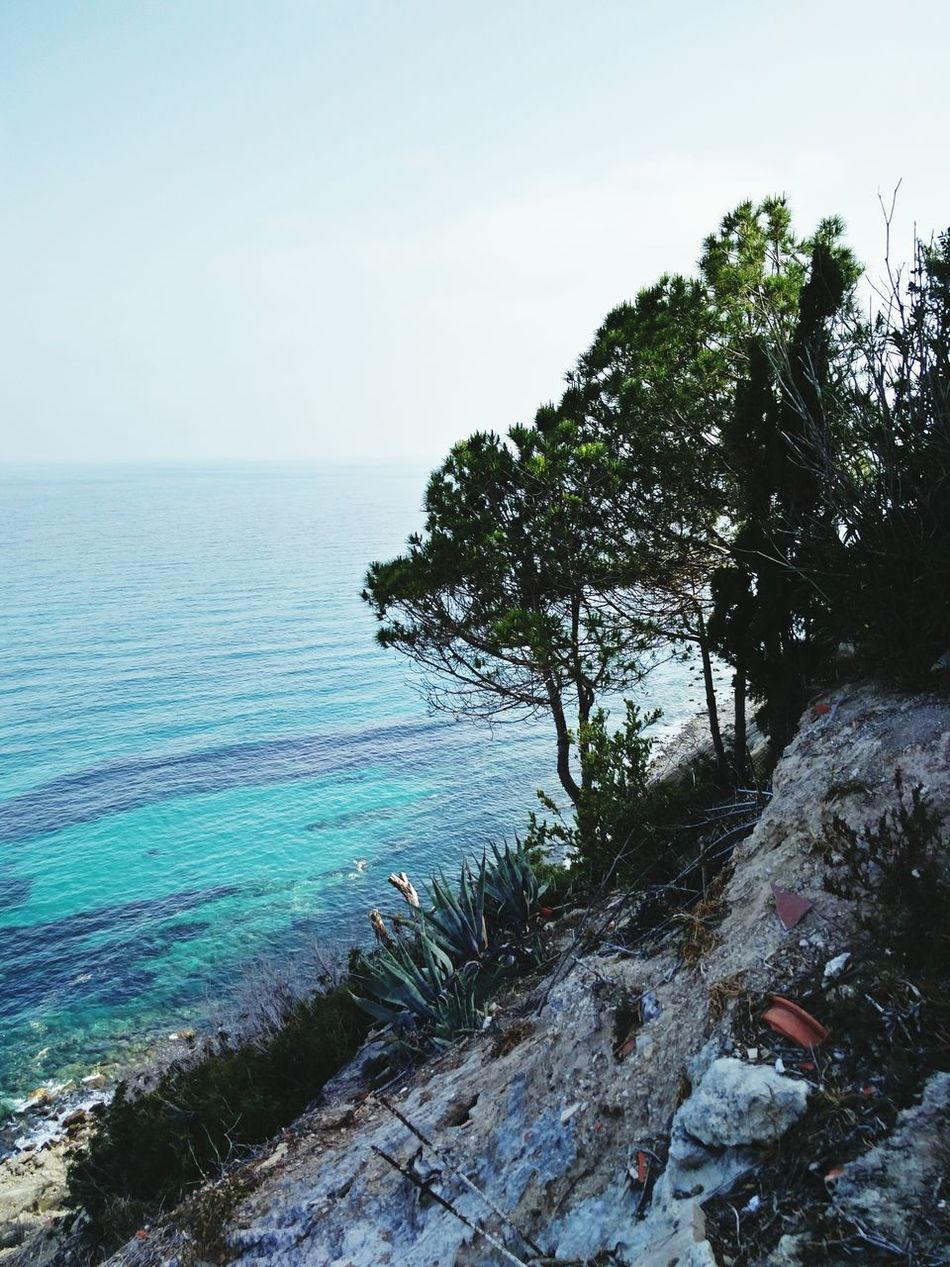 Cliff Cliff Cliffside Cliffview Tree Trees Sea Seaside Sea View Mediterranean  Mediterranean Sea El Campello SPAIN Pueblo Acantilado Nature's Diversities The Great Outdoors - 2016 EyeEm Awards The Essence Of Summer