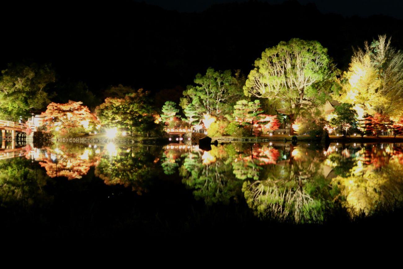 ライトアップ 田舎 秋 Canon Eos  趣味 紅葉