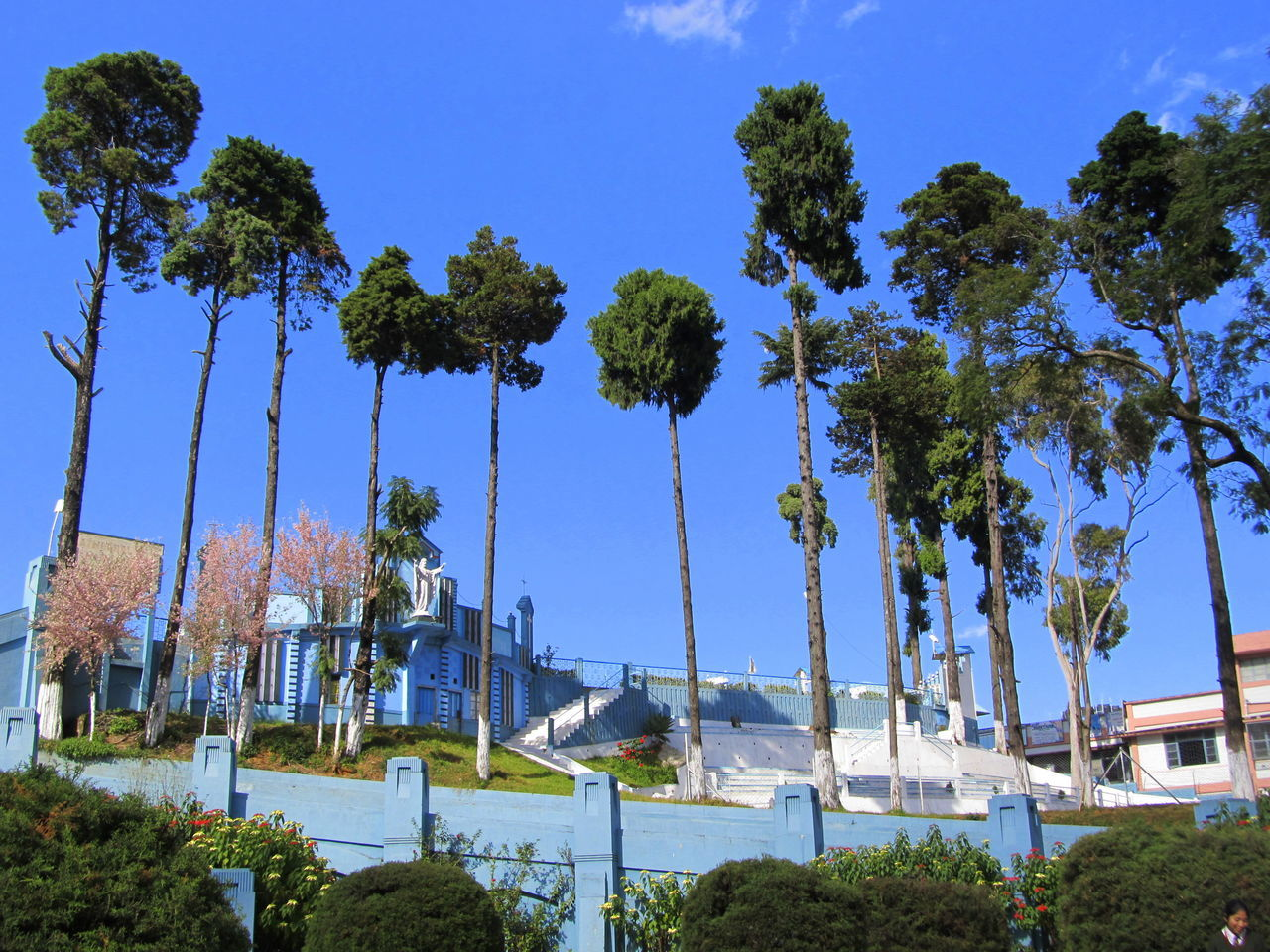 Architecture Blue Branch Church Clear Sky Day Growth Low Angle View No People Outdoors Sky Tree