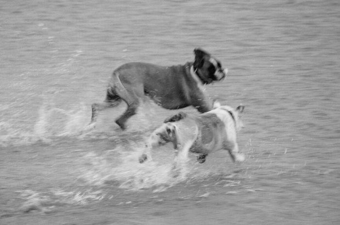 Blackandwhite Dog Dogs SweetLe