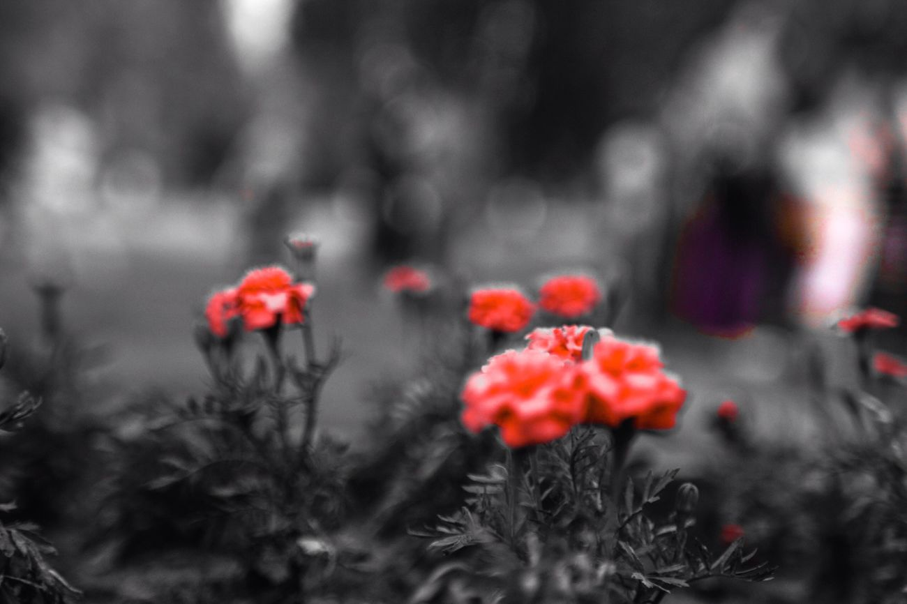 But to be yourself is all that you can do. Flowers Red Carmine
