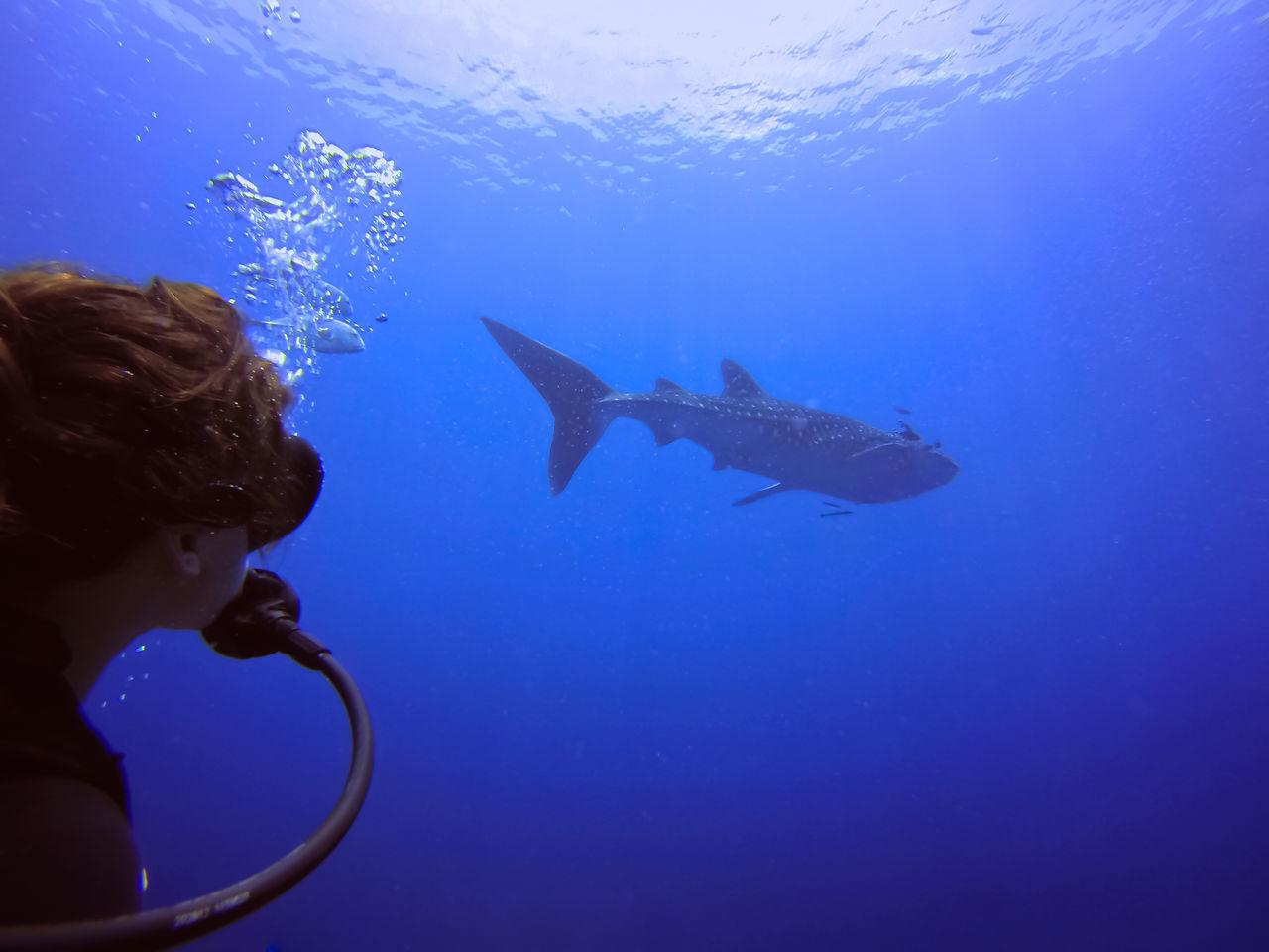 Beautiful stock photos of hai, 25-29 Years, Adventure, Animal Themes, Animal Wildlife