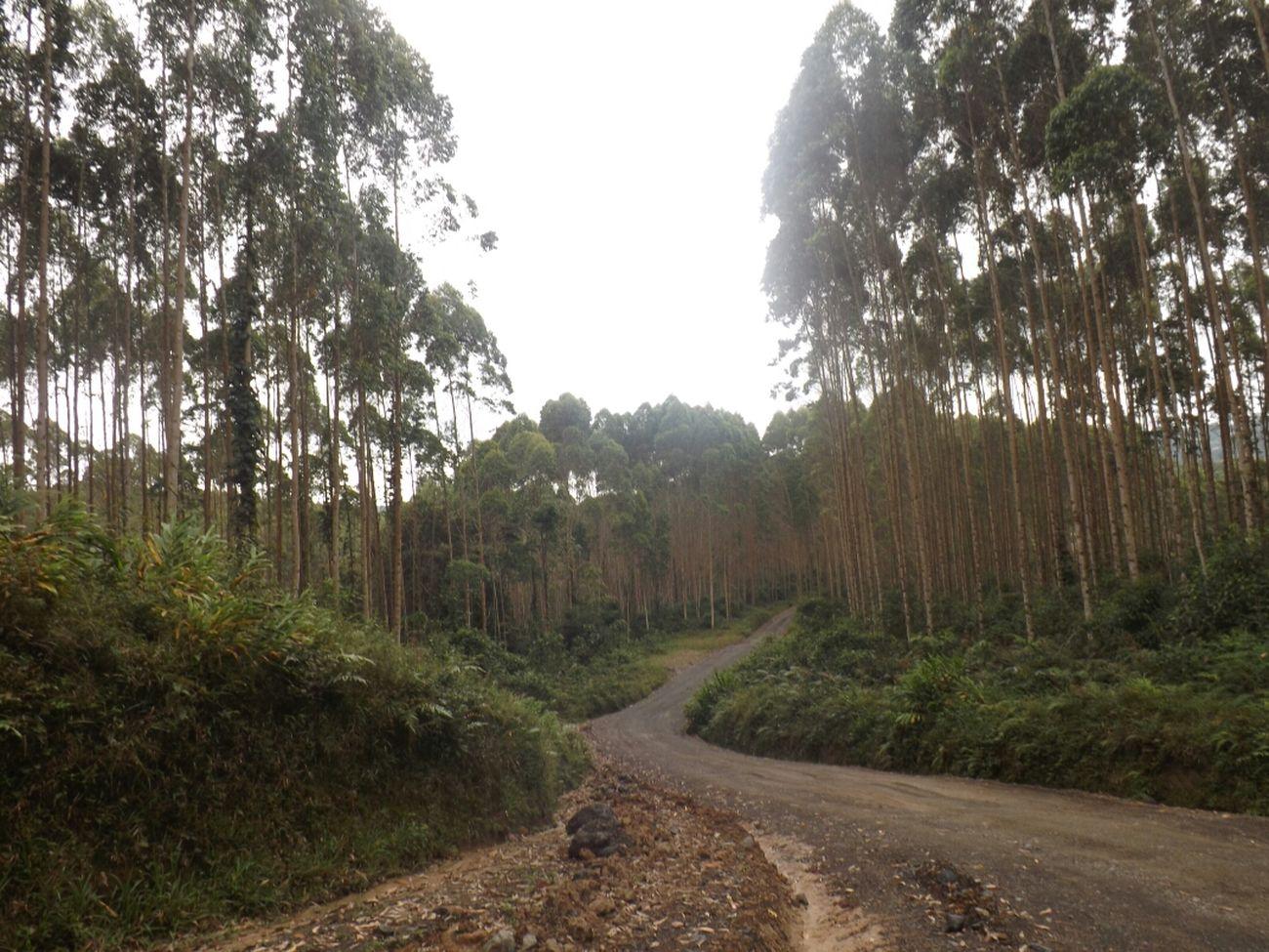 Amo este paisaje! Relaxing Colombia Es Bella Enjoying Life Walking Around