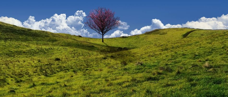 Beautiful stock photos of green, Beauty In Nature, Blue, Cloud, Countryside