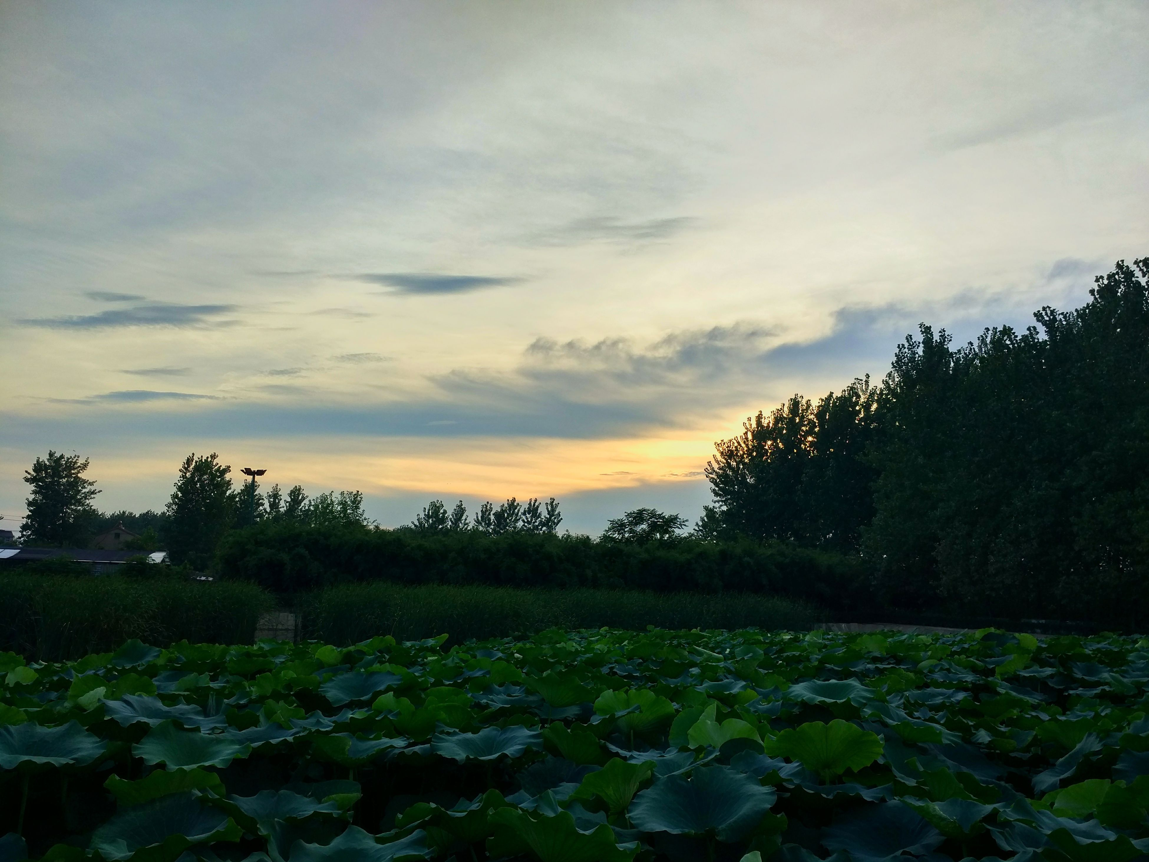 nature, beauty in nature, sunset, scenics, tranquility, sky, growth, tree, tranquil scene, no people, water, cloud - sky, lake, outdoors, leaf, plant, day, freshness