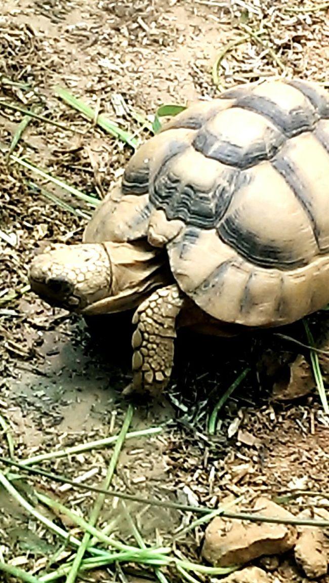 Mini tortoise !
