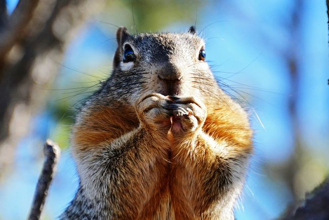Phuket,Thailand Animal A Lone Eating Eat Squirrel Nature